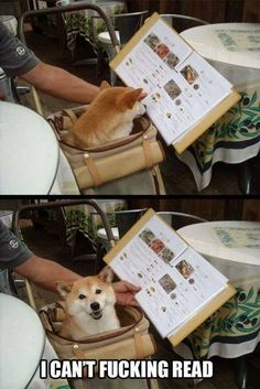Doggie can't read