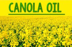 Canola Oil: Canola oil gets a bad rap thanks to speculative hearsay and email chains of the '90s and early aughts. But no scientific study proves that it poisons like mustard gas or that it causes mad cow disease. Canola oil ranks high in the healthy category—not only is it chock-full of essential fatty acids but it has the lowest saturated fat content—7 percent(olive oil has 15 percent)—of any oil. Avoiding GMOs? Look for the organic and expeller- or cold-pressed kind in natural food…