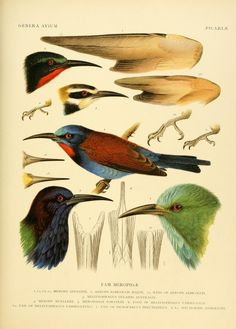 The Biodiversity Heritage Library works collaboratively to make biodiversity literature openly available to the world as part of a global biodiversity community. Science Illustration, Nature Illustration, Fantasy Illustration, Digital Illustration, Nature Prints, Bird Prints, Animal Drawings, Animal Illustrations, Illustrations Posters