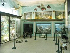Suffolk County Vanderbilt Museum is a unique combination of mansion, marine and natural history museum, planetarium and park. Visit us for a fun filled day!