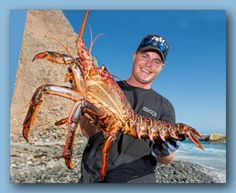 Brendan Dirks, 26, of Dana Point displays the 15-pound, 9-ounce California spiny lobster he caught off the Dana Point Headlands on Monday night. Dirks released the lobster back into the ocean on Wednesday, near where he caught it.  by Leonard Ortiz