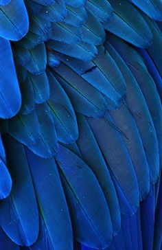 "michaelfitzsimmons:    ""Macaw Feathers V"". Photo by Michael Fitzsimmons. Full portfolio at www.500px.com/MFitz"
