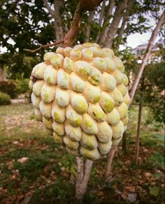 What do you call this fruit in your country? – Anthia's Culture Magazine – Medium