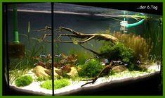 Mein Naturaquarium nach Vorbild Takashi Amano zu Beginn der Einrichtung