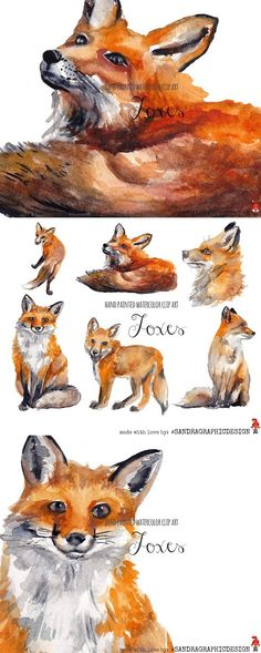 Watercolor Fox, Watercolor Paintings, Fox Painting, Forest Animals, Hobbit, Animal Drawings, Paint Colors, Clip Art, Hand Painted