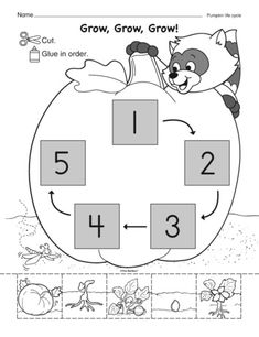 Kiddos cut out the pieces that show the stages of a pumpkin's life cycle and…