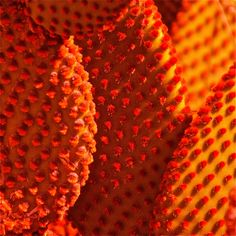 "Saatchi Art Artist: Susan Burger; Digital 2009 Photography """"Orange Cactus"" - Edition 1 of 25"""