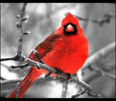 fabulous red color!