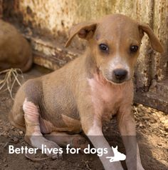 Don't let the innocent dogs of Sierra Leone suffer | World Animal Gifts - World Animal Protection