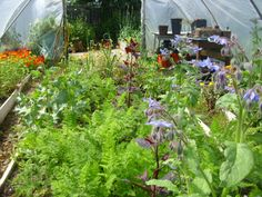 Like her blog. And the Polytunnel