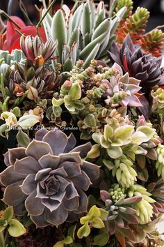 Hanging basket of succulents