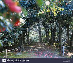 camellia-tunnel