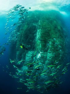 Diving at Roca Partida by Vlad Karpinskiy on 500px