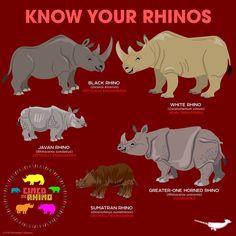 Know Your Rhinos Especie Animal, Animal Facts, Mundo Animal, Rare Animals, Animals And Pets, Strange Animals, Primates, Mammals, Animals Information