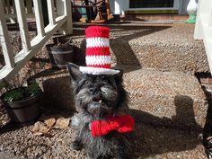 Ravelry: TheGrouchyCairn's Maisie Celebrates Dr. Seuss' Birthday