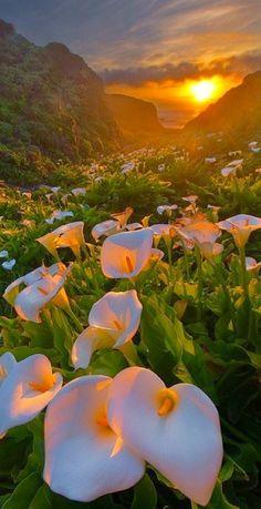 Prachtig is de natuur zo!