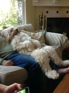 Dog and Owner Couch Potatoes