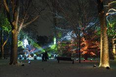 Illumination at The Morton Arboretum is even prettier with snow :)