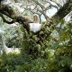 Perched / Rodney Smith Photography