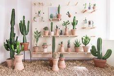 Kaktus København 3 #interiores #comercio #cactus