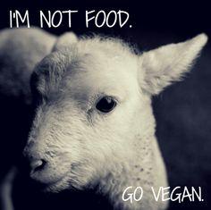 all lives matter, go #vegan