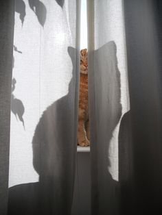 mypoetcard:    Beanz the purring shadow by Hazel Terry on Flickr.