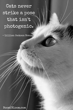 Cats never strike a pose that isn't photogenic quote. Quotes about cats. Cat Quotes #CatQuotes #QuotesAboutCats #Cats