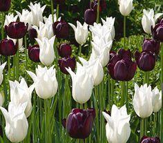 Serenity in the Garden: Black and White in the Garden