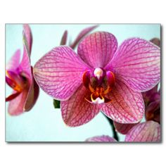 Sold this pink #orchids to UK. tx