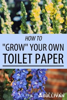 7 Plants You Can Grow Into Your Own Toilet Paper - Survival Sullivan - If you're looking for SHTF tolet paper alternatives, these 7 plants can be grown in your back yar - Urban Survival, Homestead Survival, Wilderness Survival, Survival Prepping, Survival Skills, Survival Gear, Survival Shelter, Survival Quotes, Emergency Preparedness