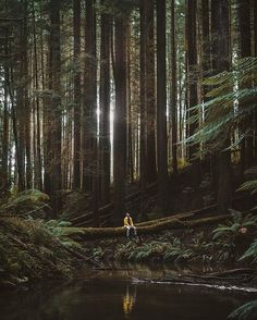 Beech Forest, Victoria, Australia. Photography by @borneon.lad