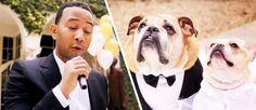 """O cantor e pianista John Legend lançou um video a cantar""""All Of Me""""durante a cerimónia de casamentodos seus cães. O videotem um final bem humorado e uma causa justa. Trata-se de uma ação para arrecadar fundospara …"""