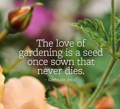 """""""The love of gardening is a seed once sown that never dies"""" - a wonderful gardening quote from Gertrude Jekyll. #gardens #gardening #quote #quotes"""