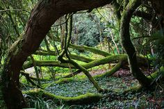 The Lost Gardens of Heligan... by Benjamin Vander Steen...
