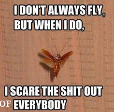 Cochroaches..