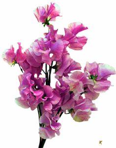 Flores de Primavera, flores, ramo de flores,