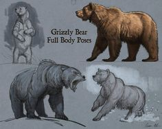 Drawing Animals in the Zoo - Drawing On Demand Animal Sketches, Animal Drawings, Drawing Sketches, Art Drawings, Drawings Of Bears, Drawing Animals, Grizzly Bear Drawing, Ours Grizzly, Bear Sketch