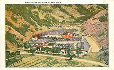 Vintage Postcard Bird Aviary Catalina Island CA Los Angeles County