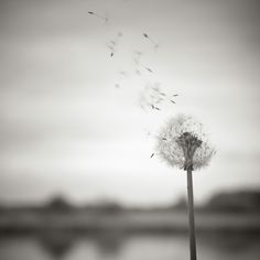 Love! Then add a verse about spreading love. When you blow on a dandelion it spreads everywhere and spreads seeds to grow more dandelions. Love is similar