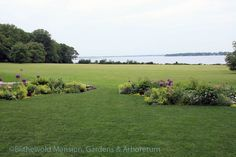 North Garden view with Allium 'Pinball Wizard', mid June