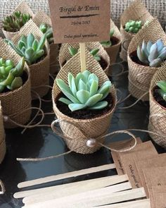 Trendy Ideas For Rustic Succulent Wedding Succulent Wedding Favors, Wedding Favours, Wedding Gifts, Wedding Flowers, Wedding Day, Wedding Rustic, Diy Wedding Souvenirs, Baby Wedding, Rustic Weddings