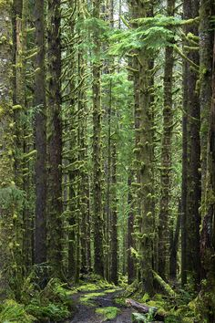 Olympic National Park, Washington State, USA. Great hike