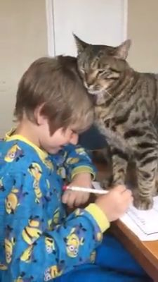 Good luck doing your homework :D - Hunde - Katzen Bilder Funny Animal Videos, Cute Funny Animals, Cute Baby Animals, Funny Cute, Animals And Pets, Cute Cats, I Love Cats, Crazy Cats, Beautiful Cats