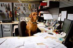 Dog at work ! (at BD)