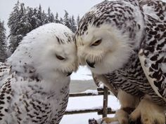 40 Great Owl Pictures to Admire Owl Photos, Owl Pictures, Animals And Pets, Baby Animals, Cute Animals, Beautiful Owl, Animals Beautiful, Owl Bird, Pet Birds