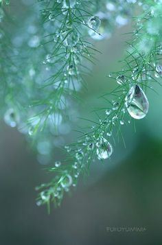 36 Ideas Macro Photography Nature Flowers Water Droplets For 2020 Water Drop Photography, Levitation Photography, Rain Photography, Landscape Photography, Abstract Photography, Experimental Photography, Exposure Photography, Flower Pictures, Nature Pictures