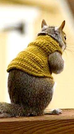 Fashionista Squirrel ❊