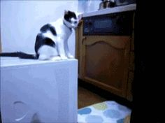 The Definitive Collection Of Cat Gifs