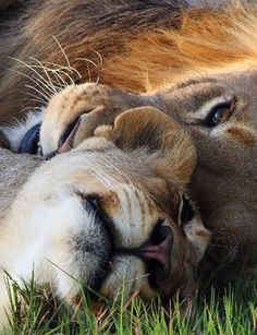 Married togetherness! #BigCatFamily