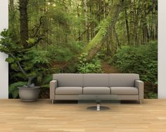 A Trail Cuts Through Ferns and Shrubs Covering the Rain Forest Floor Wall Mural – Large